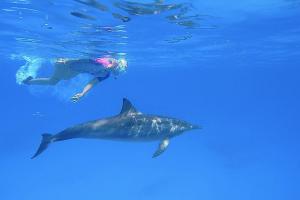delfinekkel_a_vadonban_01