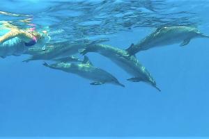 delfinekkel_a_vadonban_02